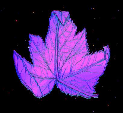 colourized