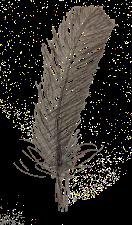 feather - digital artwork