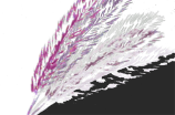 feathers4